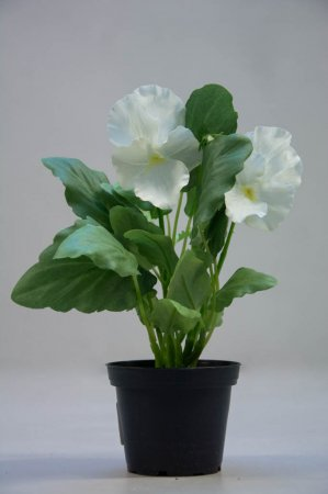 Kunstige blomster - Hvid stedmoderblomst i potte