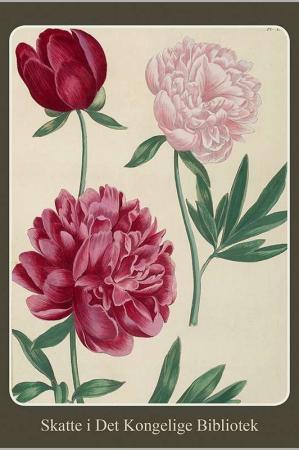 Kort med kuvert med motiver af blomster