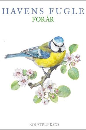 Kort og kuvert med motiver af havens fugle - forår